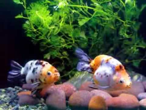Peixes Exóticos ! (Exotic Fish) Travel Video