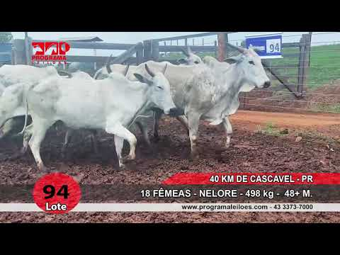LOTE 94