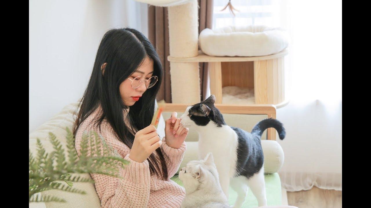 花花与三猫-记录我家真实的一天-和四只猫羞羞的日常-vlog