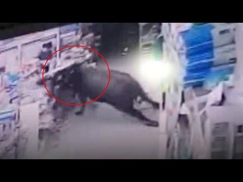 Runaway buffalo shot dead after injuring six in China