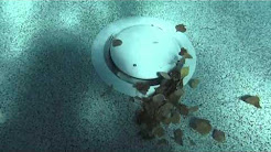 MDX R3 Safety Debris Drain   A Paramount Pool & Spa Systems product