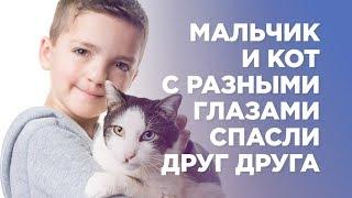 Мальчик и кот с разными глазами спасли друг друга