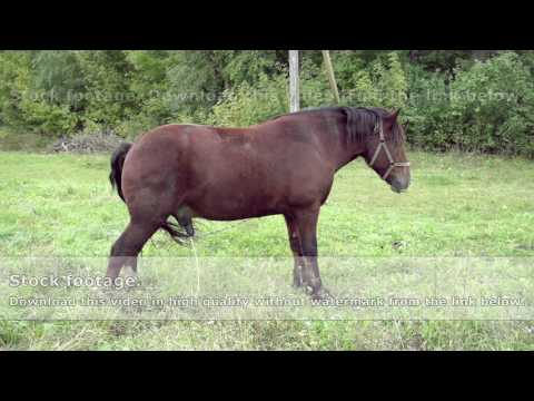 Horse peeing on green grass in the countryside from YouTube · Duration:  17 seconds