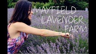 Baixar MAYFIELD LAVENDER FARM LONDRES | THAIS NUNES