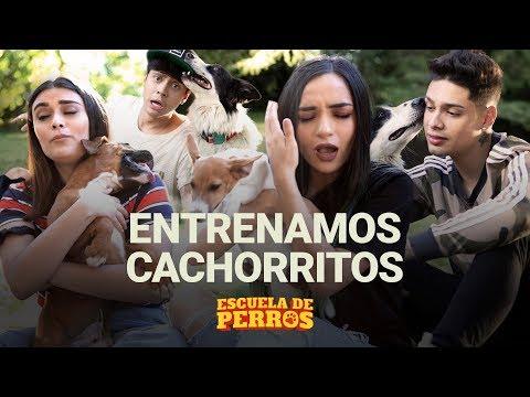 ¡Entrenamos Perritos Con Calle Y Poché, Mario Ruiz Y PaisaVlogs!