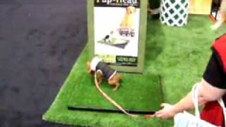 Pup-head Portable Indoor Dog Potty