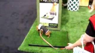 Pup-head Portable Indoor Dog Potty
