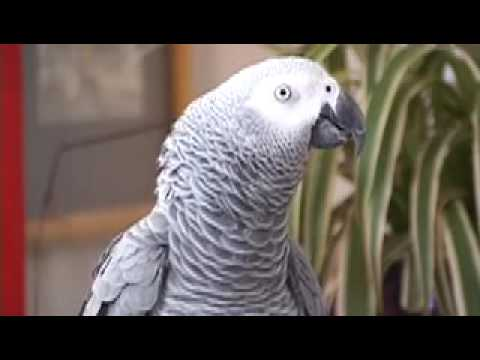 Epic Talking Parrot Cusses Up a Storm