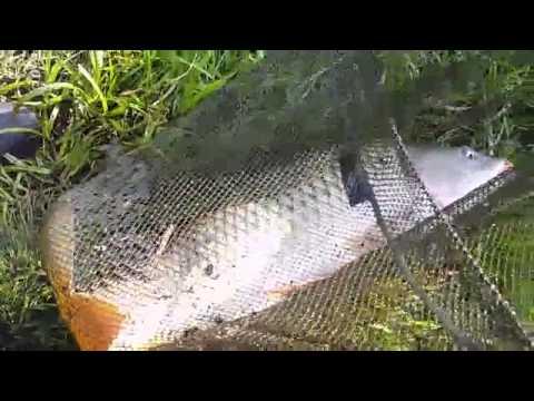 Рыбалка брянск озеро кубовая
