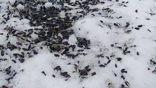 Птицы Обнинска Online