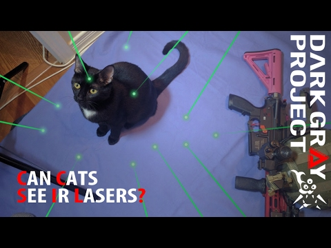 Can Cats See IR Lasers? - Proven with Night Vision! - Dark Gray Project