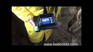 RKU-10 Doppler Diagnoses Cow 78 days Pregnant & with Twins