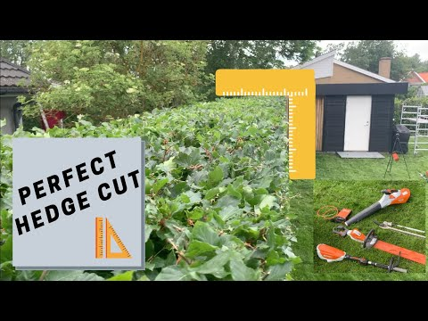 Tips from a professional:HEDGE TRIMMING
