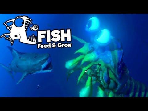 Feed and Grow Fish Gameplay German - Shrimp Vs. Great White Shark