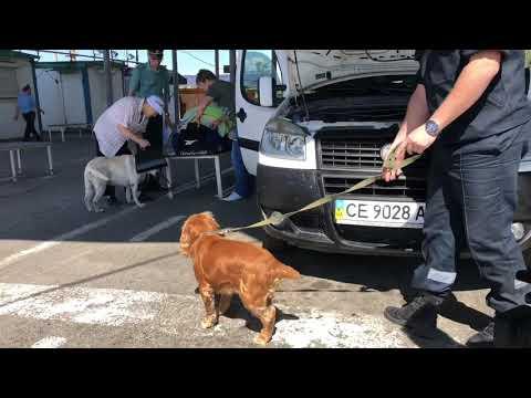 Поток туристов в Крым на границе вырос