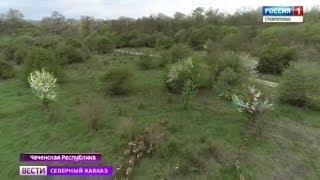 В Чечне увеличивают популяцию оленей