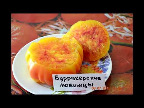 Тепличные томаты ,которые сажала в 2019 и буду сажать в 2020