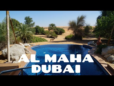 Al Maha, a Luxury Collection Desert Resort & Spa, Dubai 2019 4K