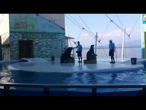 Sea Lion Show at Ocean Adventure Subic