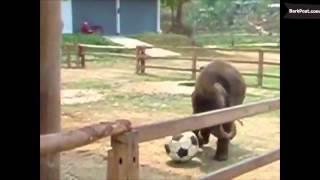 Животные, которые не знают, что они уже взрослые
