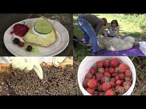 Alpaca Shearing, Berry Farm, Bees are Back & Key Lime Pie (Episode #358)