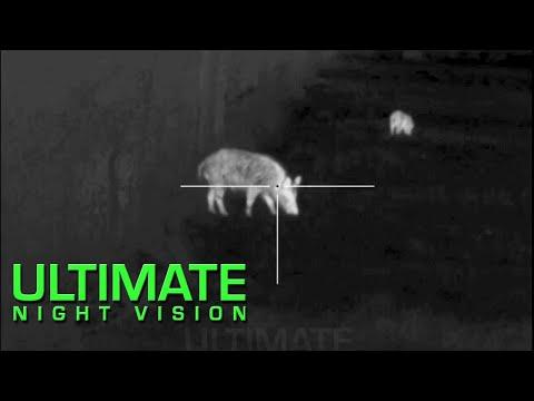 Berburu Babi Hutan Menggunakan Optik Termal   15 Babi Liar Tewas