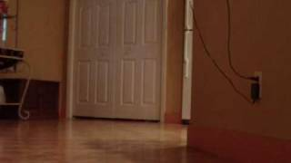 Schnauzer Dog Sliding Across Floor Playing Fetch