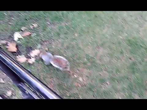 Squirrels in Madison Square Park.