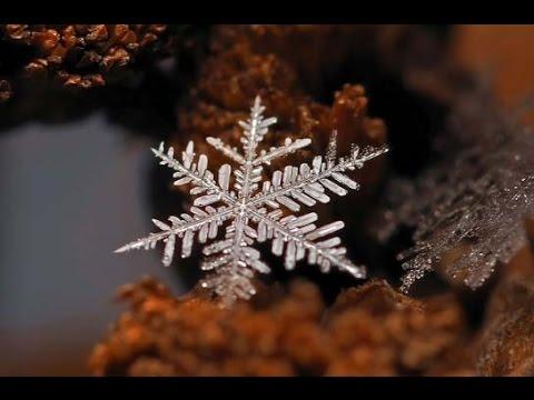 Это безумно красиво! Снежинки увеличенные в 150 раз!