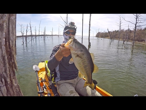 Fishing Jigs on Stumps for Pre Spawn Bass