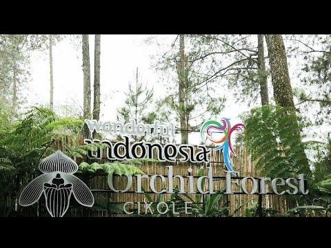 wisata-kekinian-di-bandung-orchid-forest-cikole