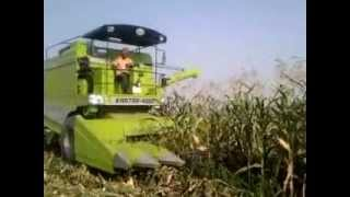MAIZE HARVESTING in India by KARTAR Crop cruiser COMBINE HARVESTER....