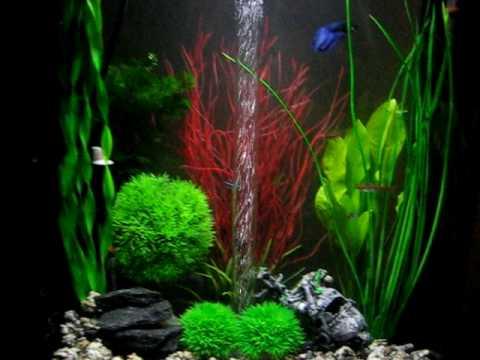 BiOrb Life 45 Litre Piano Black Aquarium   Veiltale Betta (Fighter