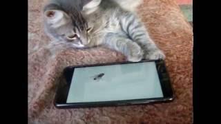 Реакция кота на телефон