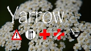 Gambar cover Yarrow: Edible, Medicinal, Cautions & Other Uses