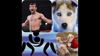 Пародия! Дагестанский комментатор | Борьба | Собаки | Хаска