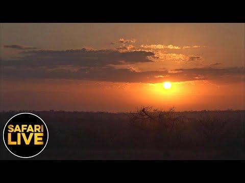 safariLIVE - Sunrise Safari - June 24, 2019