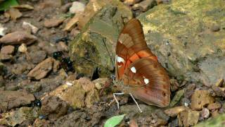Butterflies from Yungas 2012