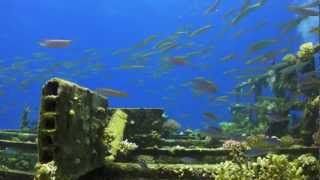 Sharm Beach Diving 2011 part 2 of 3 Thumbnail
