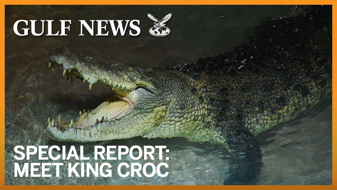Meet King Croc The Latest Addition To Dubai Aquarium Underwater - Meet worlds largest crocodile caught philippines