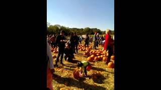 Pumpkin Picking @Queens County Farm Museum, NYC