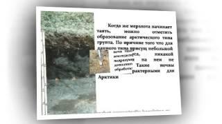 Презентация на тему Почвы России
