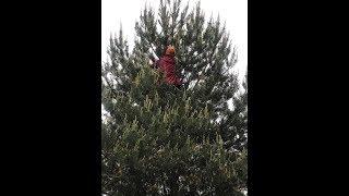 Снимаем Котейку с дерева