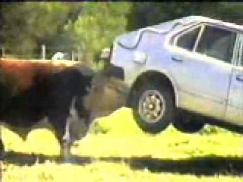 Thumbnail: bull vs car