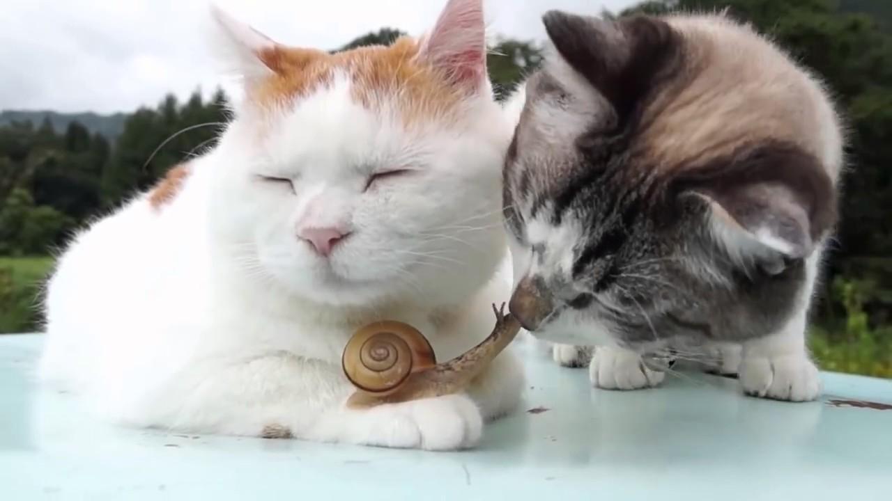 Картинки, смешные картинки про котов кошек и котят до слез