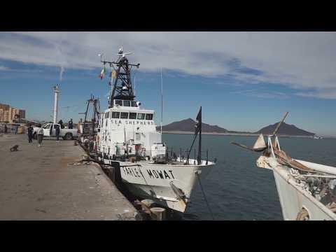 Sea Shepherd In San Felipe, Baja California MX In Dec 2016