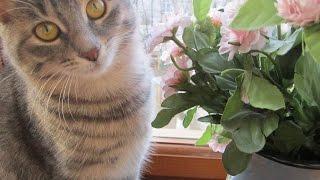 Глаза кошки и глаза человека.