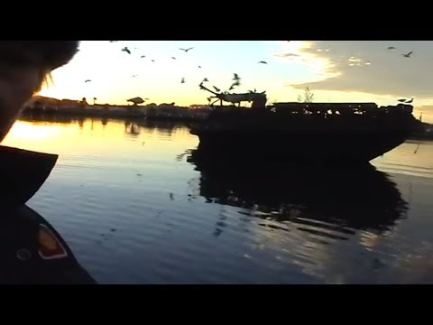 HOMEBUSH BAY SHOULD BE A CATCH AND RELEASE FISHERY, THIS IS MORE OLD FISHING VIDEOS TO ARCHIVE: