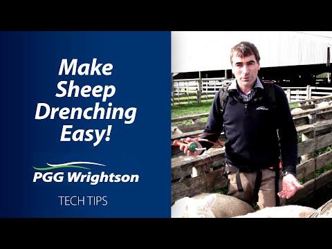 Make Sheep Drenching Easy! | PGG Wrightson Tech Tips