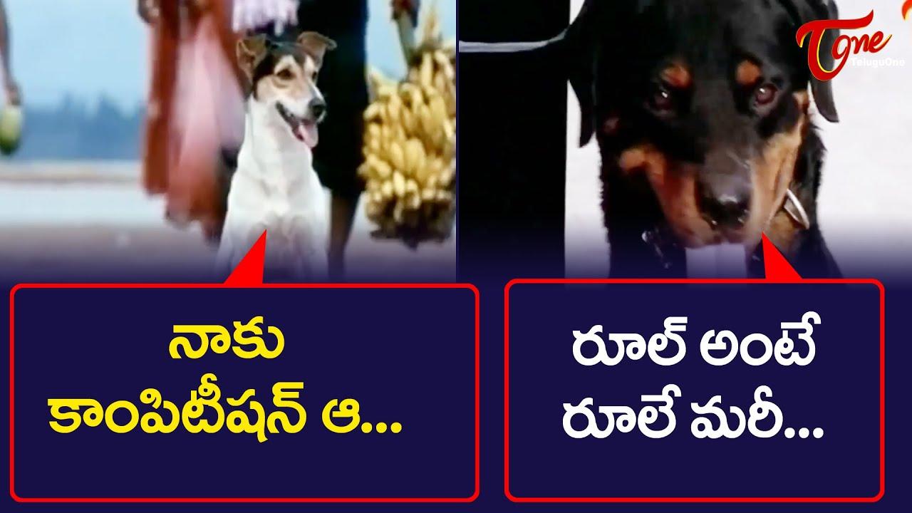 All Time Hit Telugu Movie Comedy Scenes Back To Back | NavvulaTV